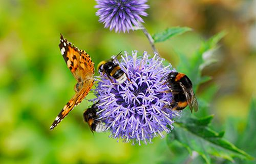 Flower butterfly and bee
