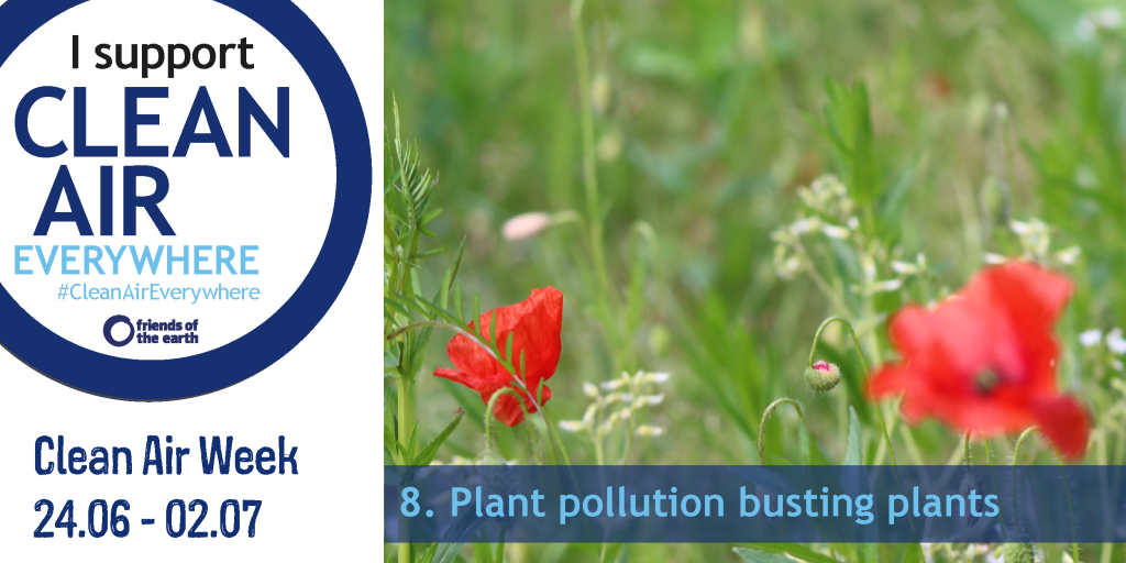 Plant pollution busting plants