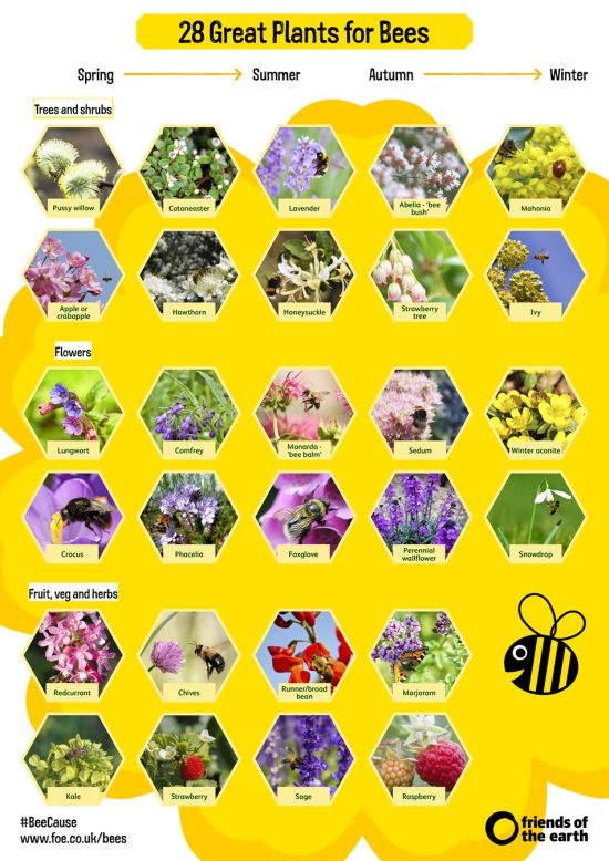 28 Great Plants for Bees