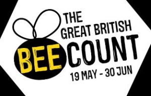 The Great British Bee Count 2016