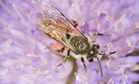 Bee image - defend nature