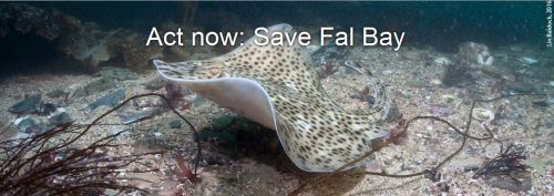 Act Now SAve Fal Bay
