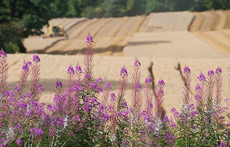 Harvesting oat, Ellingstring, North Yorkshire © Paul Harris