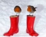 Robins and red boots