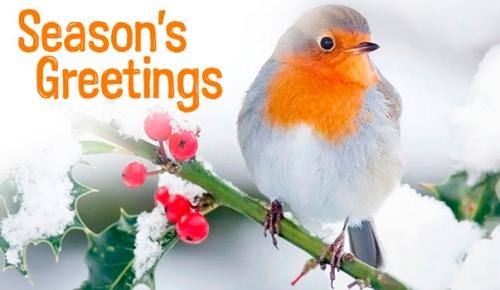 Seasons Greetings - robin