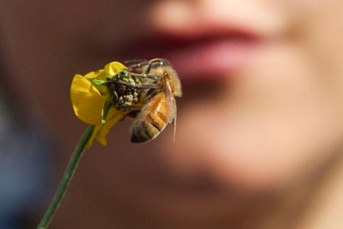 Get up close with insects - wildflowers will attract them to your garden.