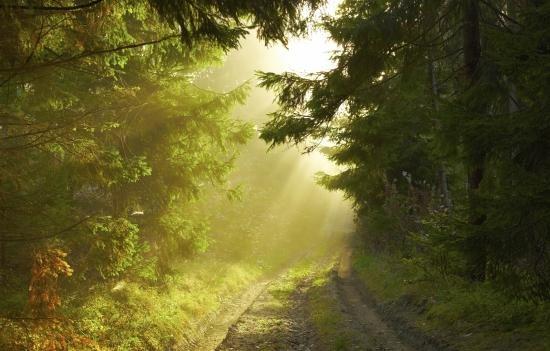 HS2 - trees sunlight image